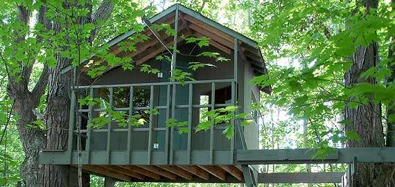 Zelkova treehouse